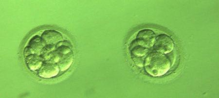 замразяване на ембриони